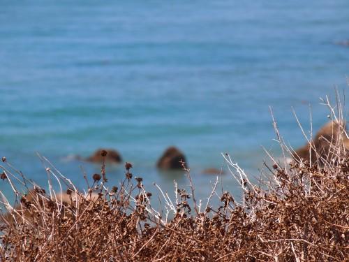 Big Sur, foto di Gloria