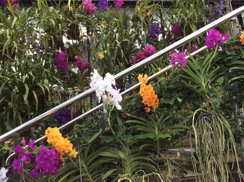 Orchidee splendide