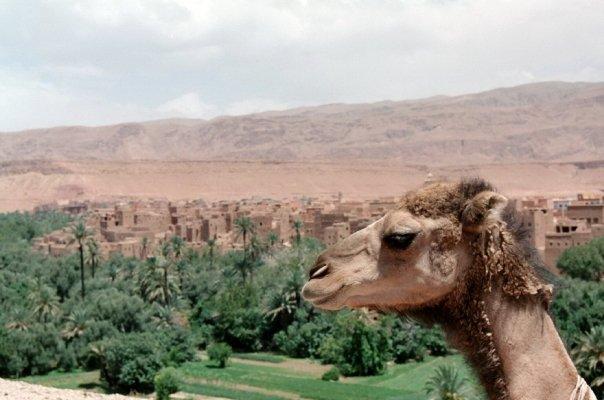 Ouarzazate, Marocco. Foto di Gian Maria Annovi
