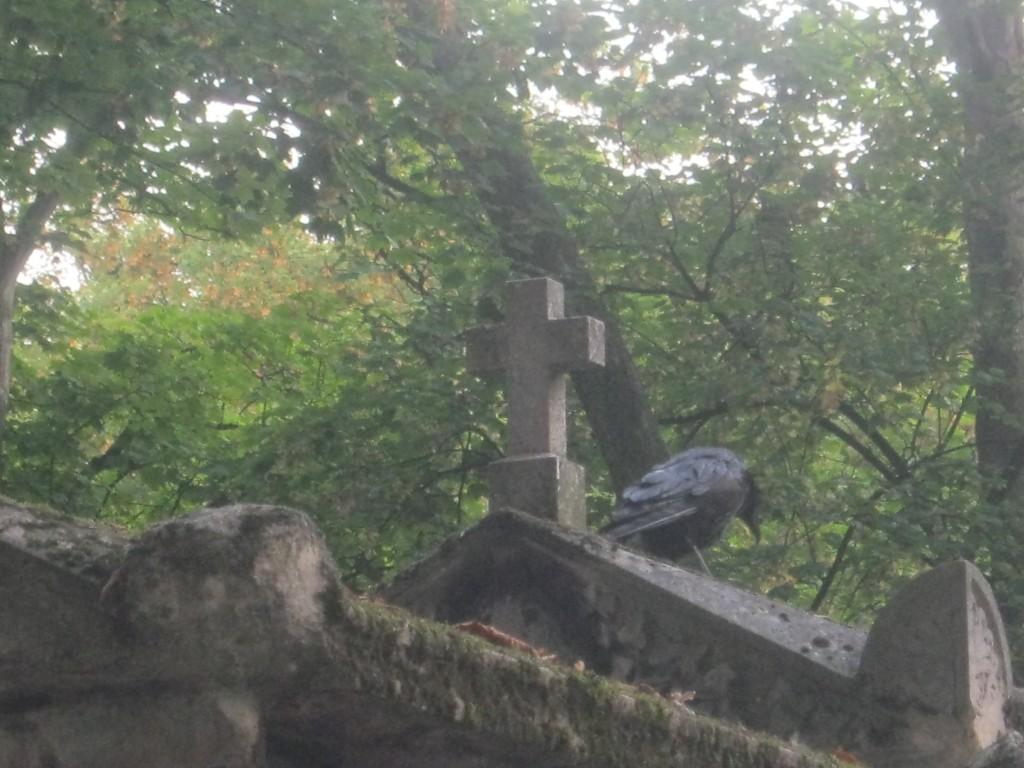 Un corvo tra le lapidi di Pere L. Foto d Gloria